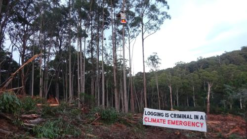 At the time of Justice Mortimer's ruling, activist groups Protect Warburton Ranges, Forest Conservation Victoria, and Kinglake Friends of the Forest Inc, staged three separate protests in active logging coupes across the Central Highlands region. Photo supplied: Protect Warburton Ranges.